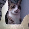 美猫発見!